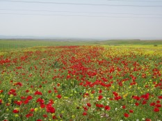 Kurdistan - Land of Flowers