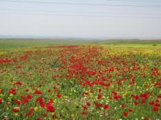 Kurdistan - Land of Flowers